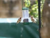 birds-_feeding-_lg